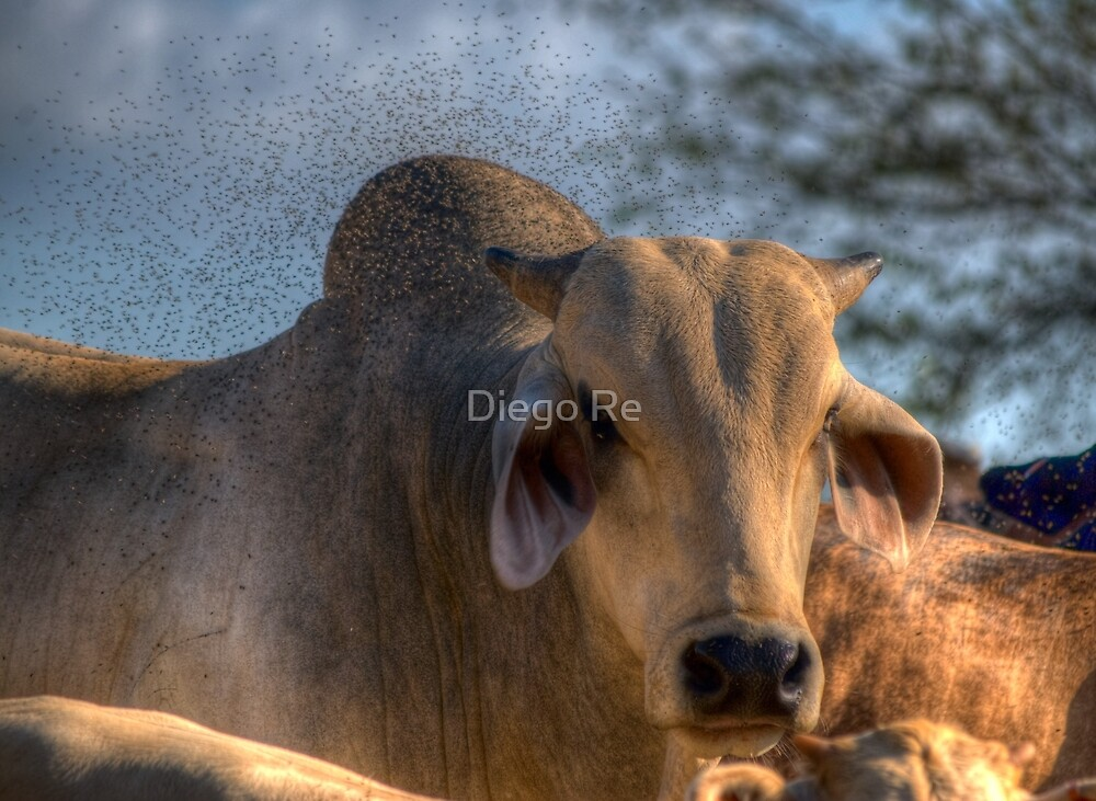 Waiting For Bug Repellent by Diego Re