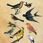 Birds by Claire Elford