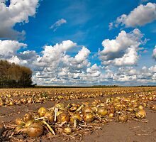Onions under a Dutch sky... by Adri  Padmos