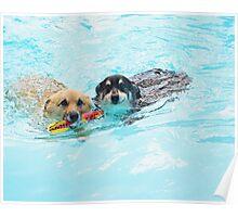 Swim !! Poster