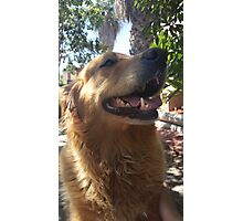 Golden Retriever Photographic Print
