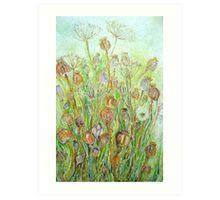 Poppy Seedheads Art Print