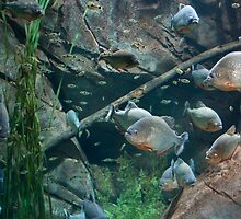 Peachy Piranhas  by Pete Karl II