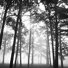 The Forrest by Trippydesigns