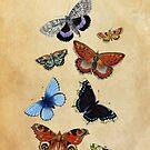 Butterflies by babibell