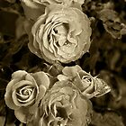 The Sepia Roses by brijo