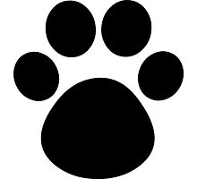 Cat Paw Photographic Print