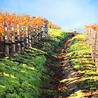 Late Autumn View of Napa Valley 3 by Ellen Cotton