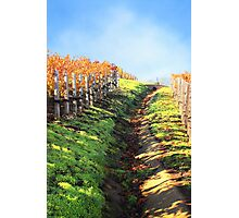 Late Autumn View of Napa Valley 3 Photographic Print