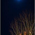 A bare tree under moonlight by mashdown