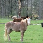 Horses in Cades Cove by JeffeeArt4u