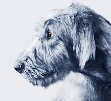 Wolfhound Pup  by Laurie Minor