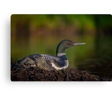 On Watch at the Nest Canvas Print