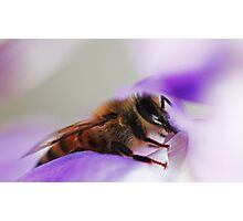 Bee On A Wisteria Flower Photographic Print