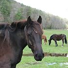 Horses of the Smokies by JeffeeArt4u