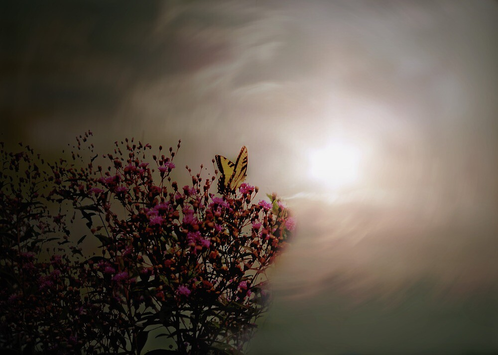 Look Toward Tomorrow by Judi Taylor