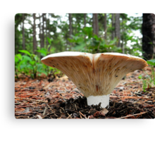 Russula Mushroom Canvas Print