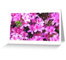 passionate pink azalea's Greeting Card