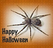 Happy Halloween Spider Greeting Card - Dolomedes tenebrosus by MotherNature
