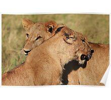 Lionesses at Kwara Poster