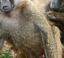 Olive Baboons Grooming Sticker