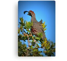 Look Out Point Canvas Print