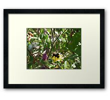 Beautiful Bumble Framed Print