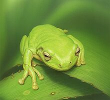 Green Frog 2 by Christopher Pope
