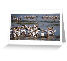 Great White Pelicans at Lake Nakuru Greeting Card