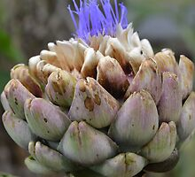 Artichoke Flowering by Deborah Clearwater
