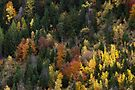 Autumn colors on mountain forest by Patrick Morand