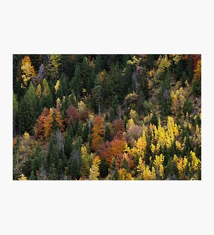 Autumn colors on mountain forest Photographic Print