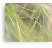 Exploring a grassy world Canvas Print