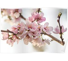 Blossoms On The Trees Poster
