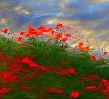 Storm of roses by Scott Wilson