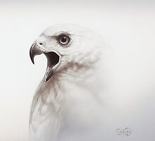 Goshawk Study by Christopher Pope