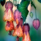 Chinese Lanterns by Dianne English