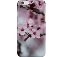 Cherry Blossom - Cowra Japanese Gardens iPhone Case/Skin