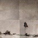 Lone Tree by Kevin Bergen