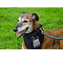 Another Gentle Soul ~ 1000 Greyhounds Event Photographic Print