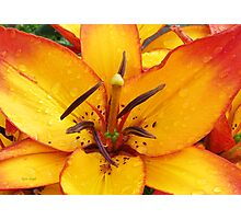 Vibrant Lily Photographic Print