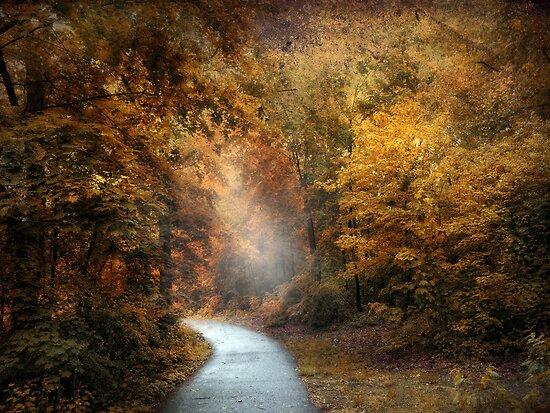 Forest Light by Jessica Jenney
