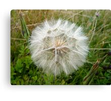Dust Ball Canvas Print