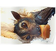 Tifa - Spectacled Flying Fox Poster
