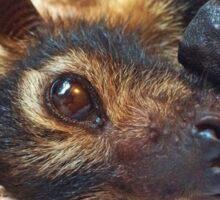 Tifa - Spectacled Flying Fox Sticker