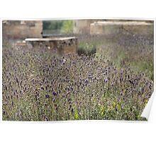 Lovely Lavender - l'Abbaye de Maillezais Poster