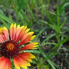 Late Summer Daisy by benjaminperfect