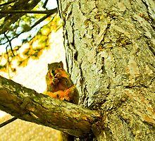 Papa Squirrel by benjaminperfect