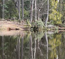 Reflections on Lake Barrington by Elaine Game