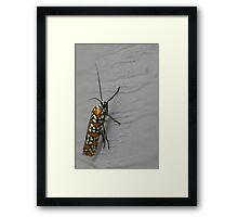 Fabulous Outfit Framed Print